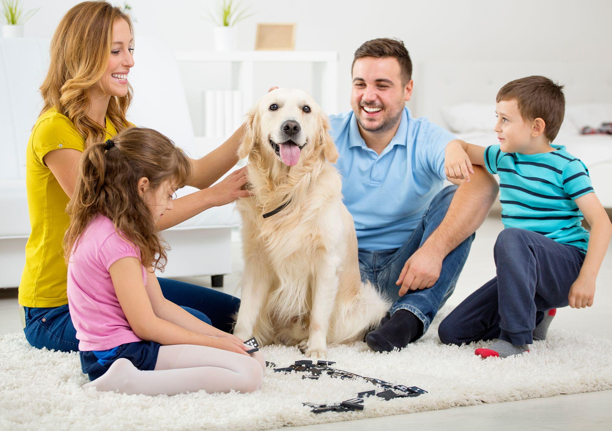 preparar llegada perro - consenso