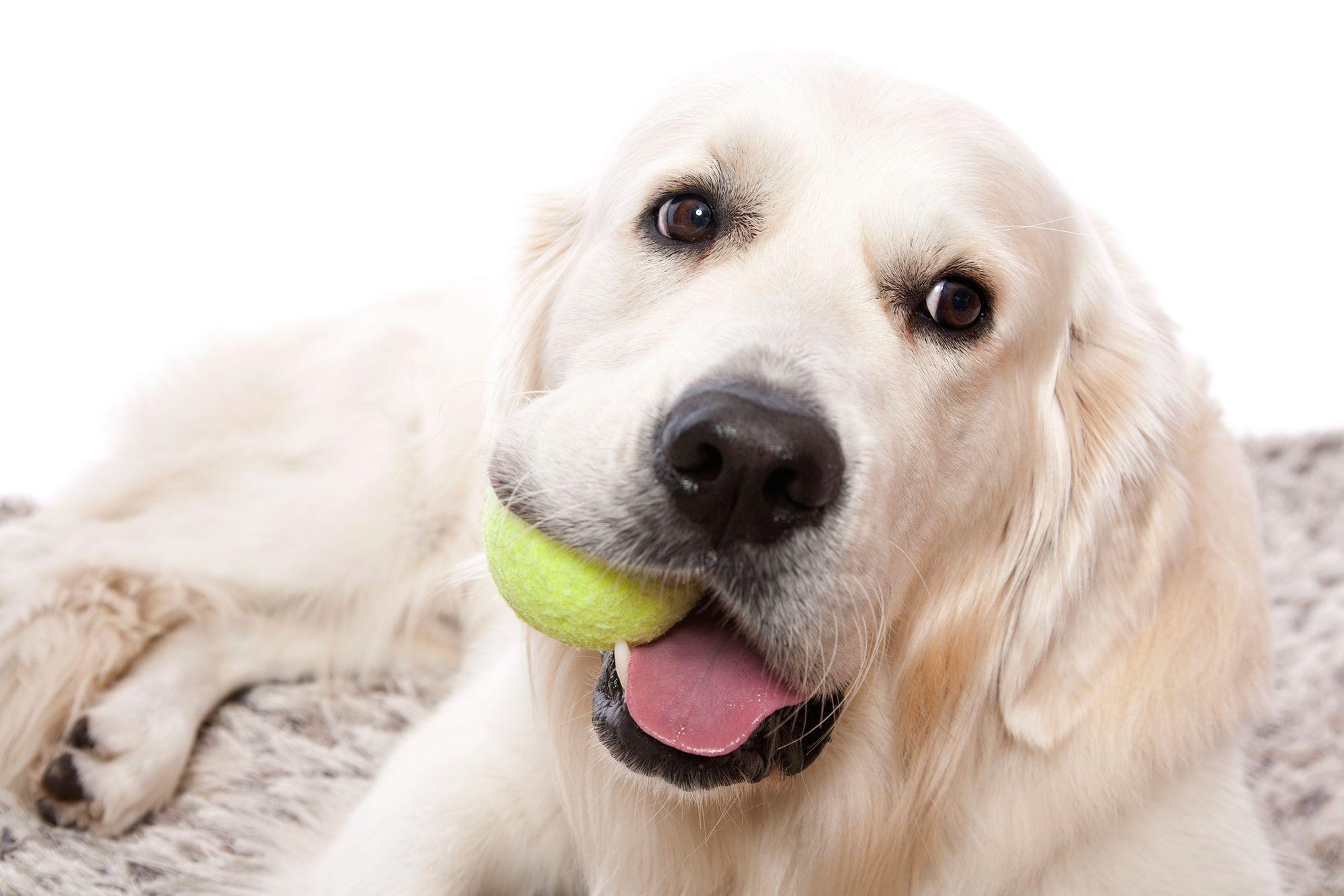 llegada perro casa - expectativas