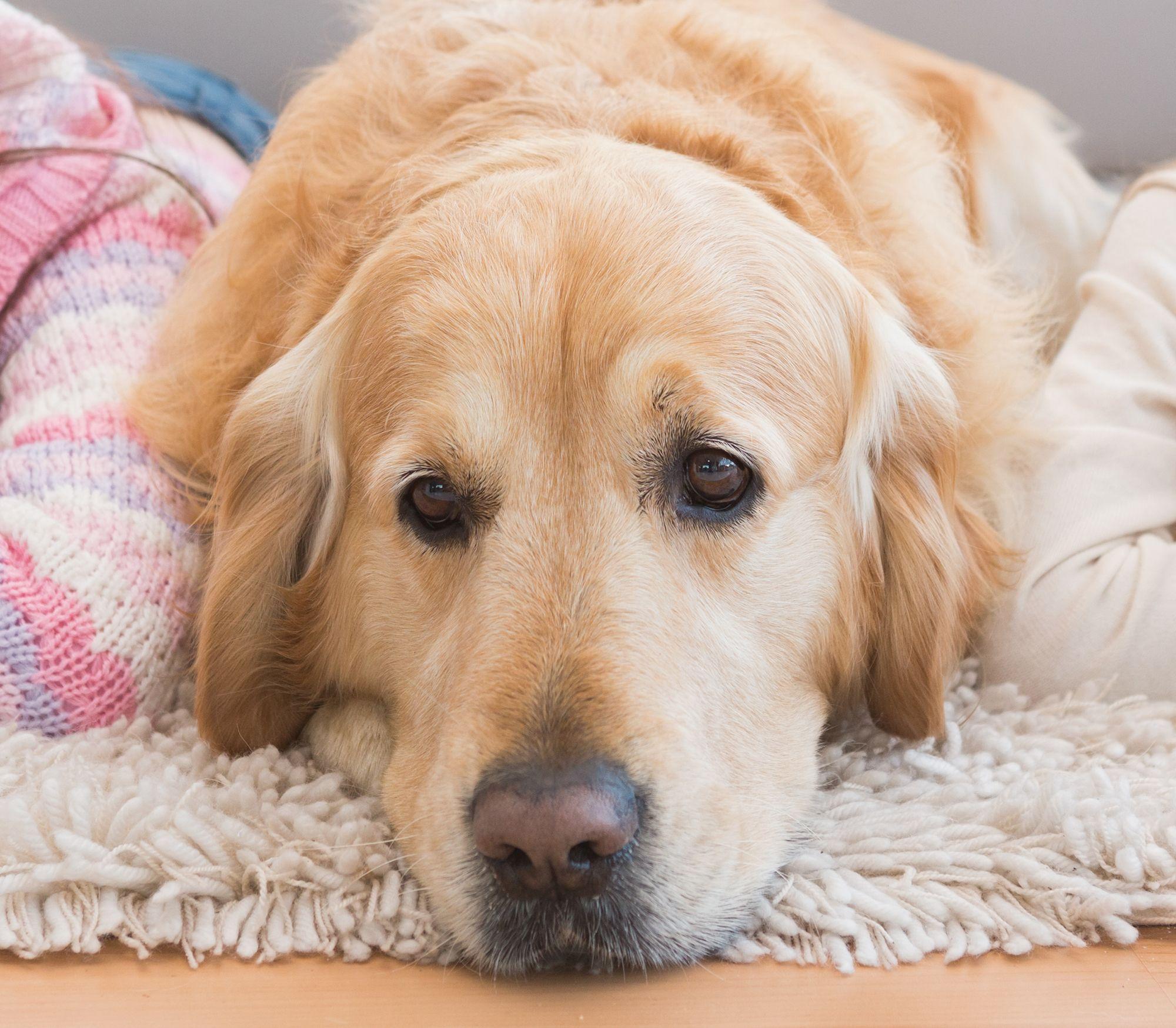 preparar llegada perro - lenguaje