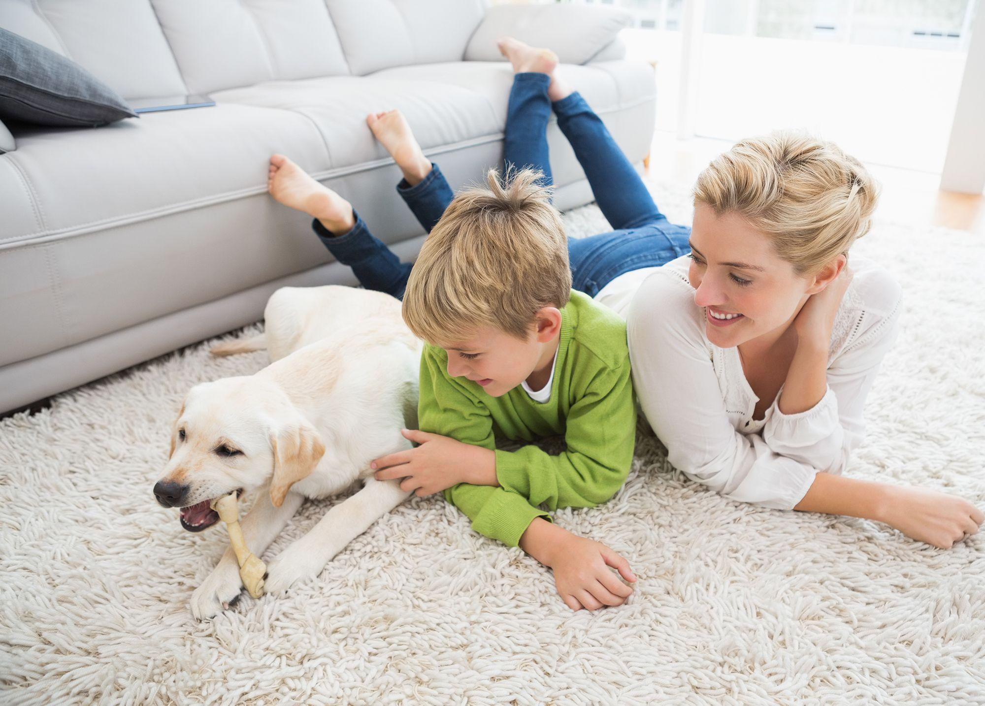 preparar llegada perro - niños