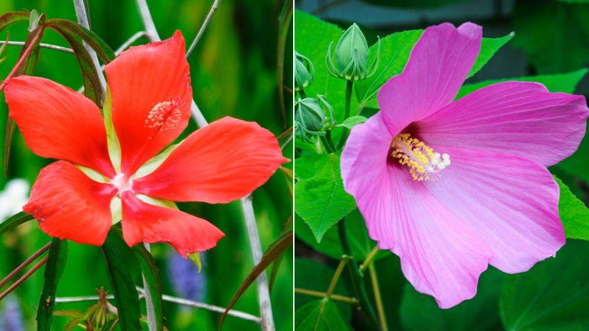 Fantástico Flor Hawaiana Del Arte Del Uña Fotos - Ideas Para ...