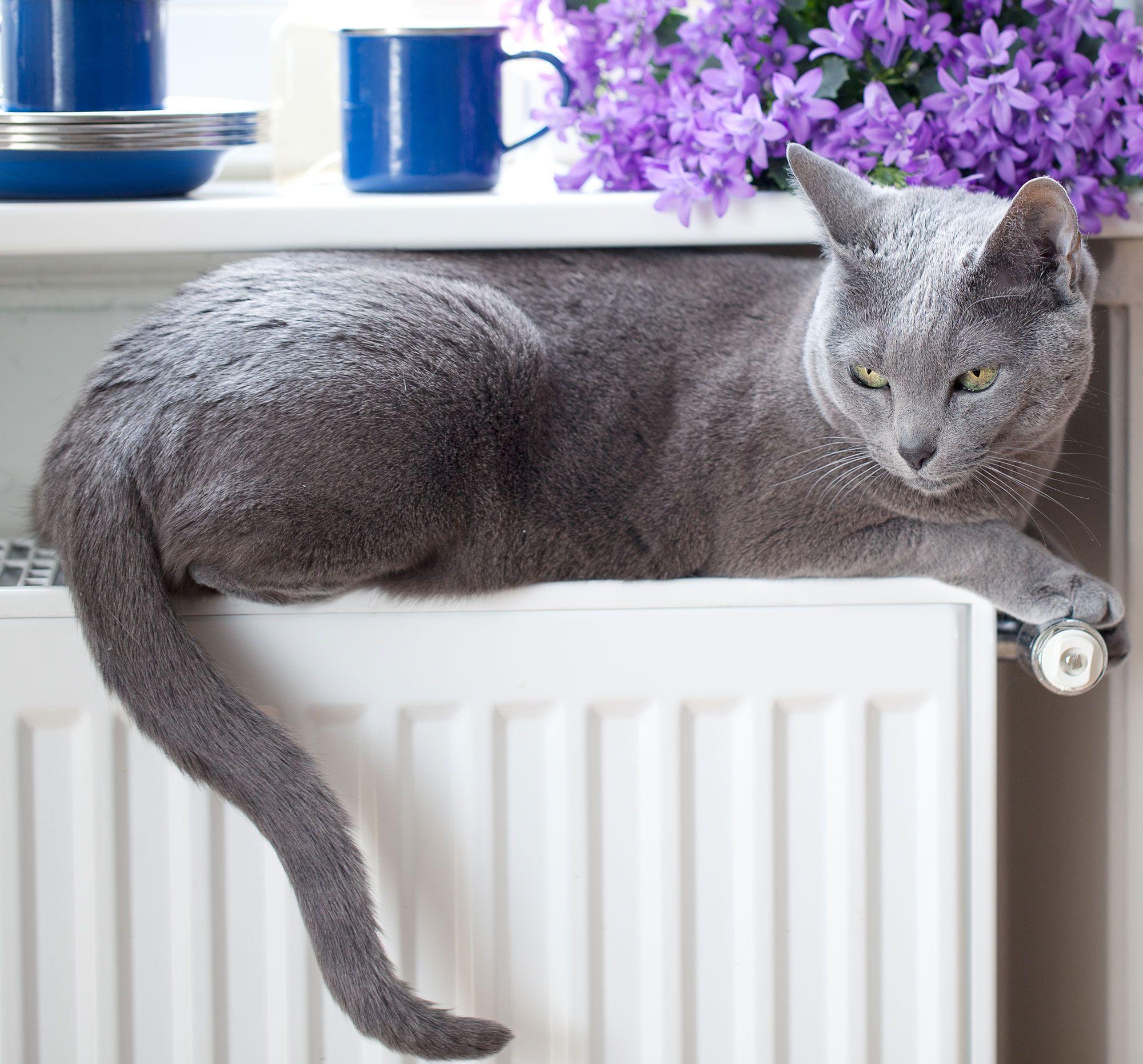 gatos frío radiador