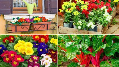 Plantas de temporada oto o invierno para terraza y balc n for Plantas pequenas para jardin
