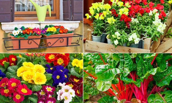 5 plantas de invierno para el balc n decogarden for Decoracion exterior jardin contemporaneo