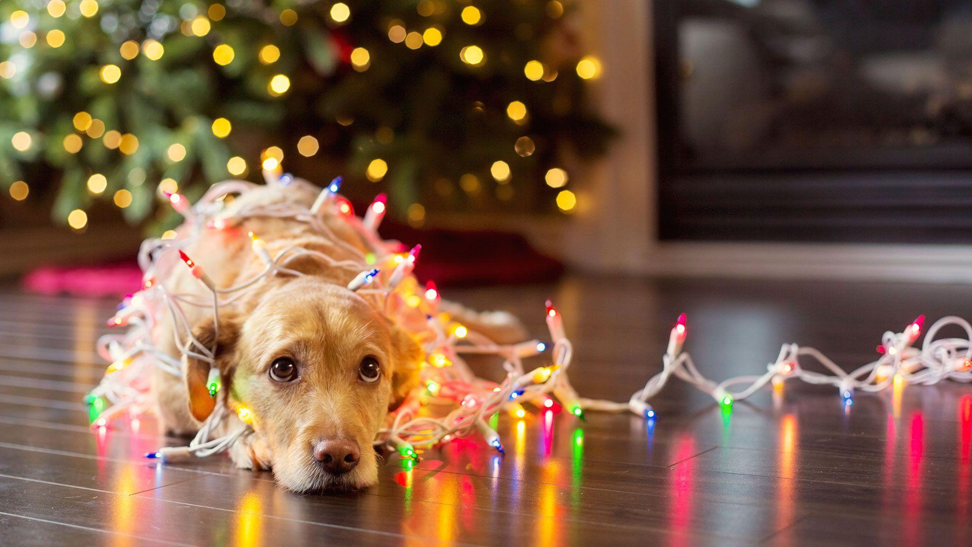 luces navidad mascotas