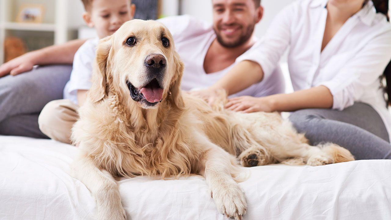 preparar llegada perro - pautas