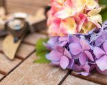 temas jardín 2016 - hortensias