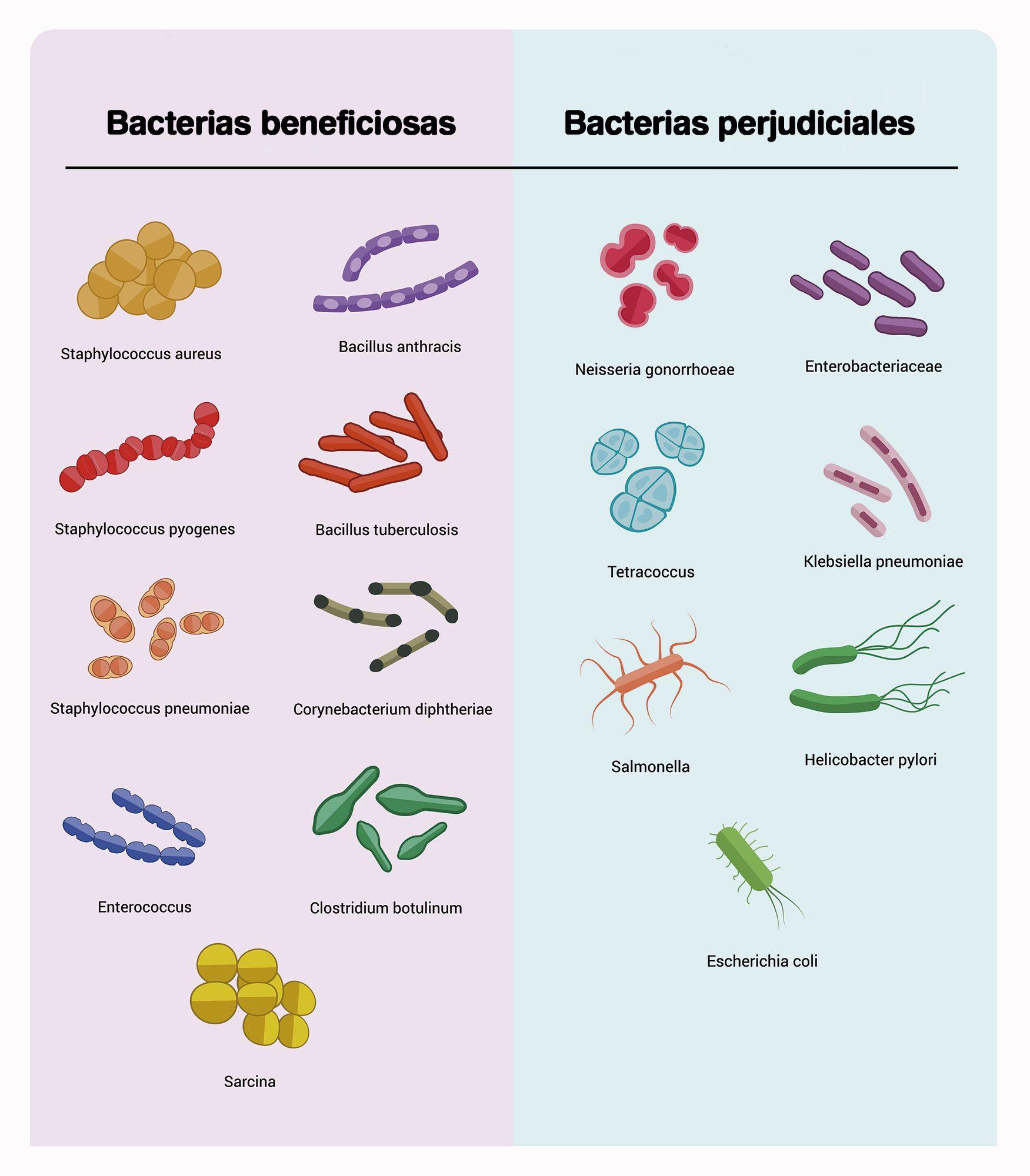 bacterias beneficiosas perjudiciales