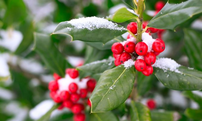 Tareas de jardiner a en diciembre hogarmania - Hogarmania jardineria ...