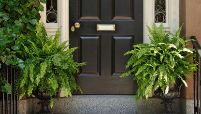 Plantas para decorar la entrada de la casa en primavera decogarden - Decorar la entrada de casa ...
