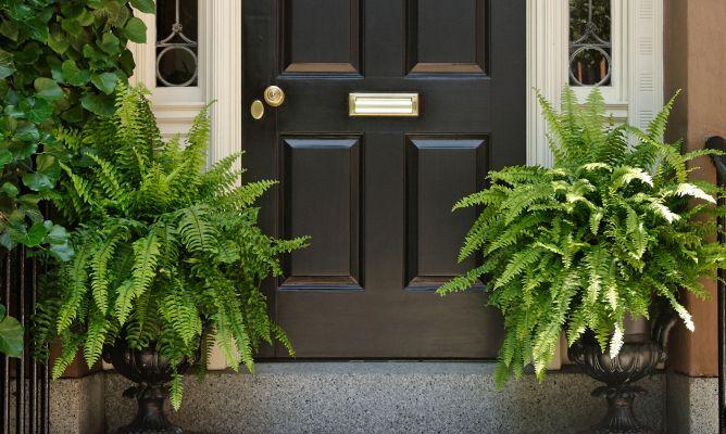 5 Plantas Para Portales O Porches Bricoman A