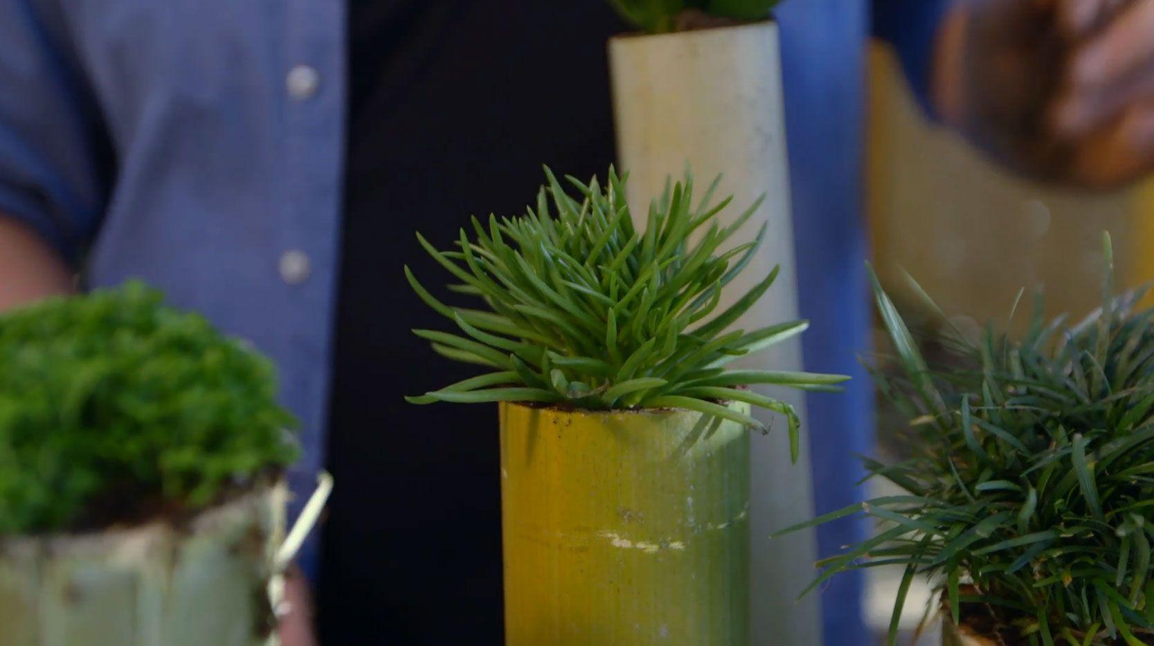 Tiestos y recipientes con tallos de bambú