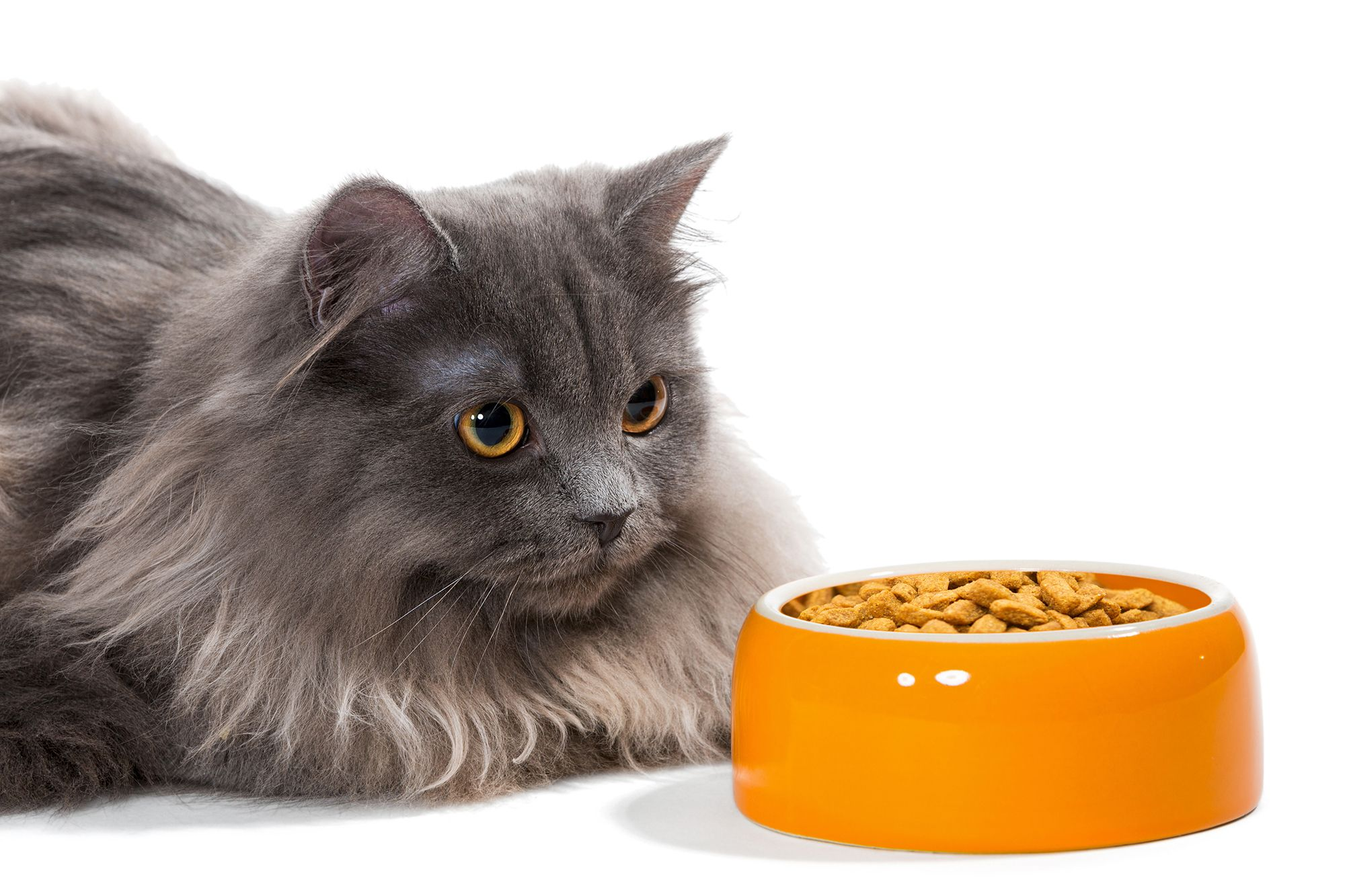alimentación gatos pelo