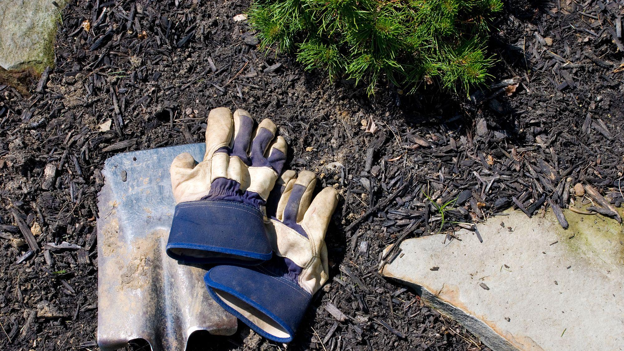 acolchado plantas o mulch