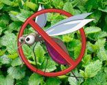 temas jardín 2016 - plantas mosquitos