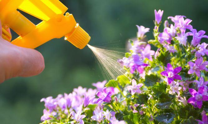 Tipos y composici n de abonos para las plantas hogarmania for Abono para las plantas de jardin