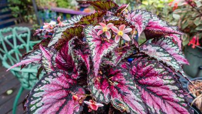 Plantas de sombra hostas o hermosas decogarden - Tipos de plantas de exterior ...