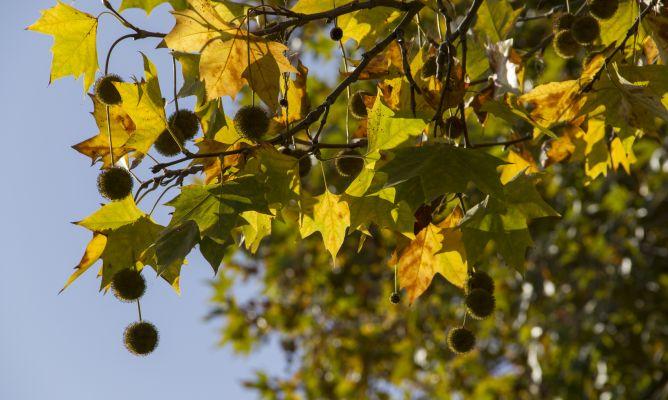 Qu rboles crecen r pido y dan mucha sombra bricoman a for Arboles de crecimiento rapido para sombra