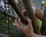 Cómo evitar que los árboles se pudran tras una poda de formación - Paso 4