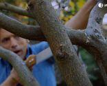 Cómo evitar que los árboles se pudran tras una poda de formación - Paso 5