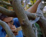 Cómo evitar que los árboles se pudran tras una poda de formación - Paso 6