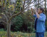 Cómo evitar que los árboles se pudran tras una poda de formación - Paso 8