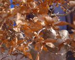 Cómo crear un micro-paisaje - Crecimiento lento bonsáis