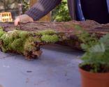 Cómo crear un micro-paisaje - Micro-paisaje en rama