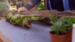 Cómo crear un micro-paisaje
