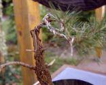 Cómo crear un micro-paisaje - Ramas de los bonsáis