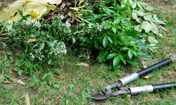 Podar arbustos del jard n bricoman a for Bricomania jardin