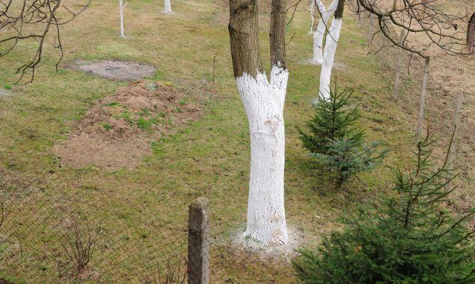 C mo encalar troncos de los rboles bricoman a for Como evitar que salga hierba en el jardin