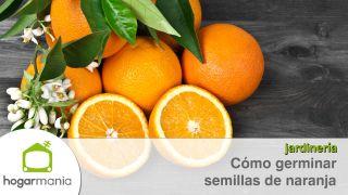 Cómo germinar semillas de naranja