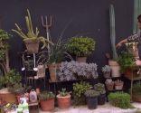 Variedades de cactus y su mantenimiento - Sampedro