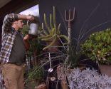Variedades de cactus y su mantenimiento - riego