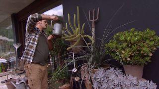 Trasplantar un cactus - Paso 6