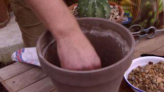 Trasplantar un cactus - Paso 1