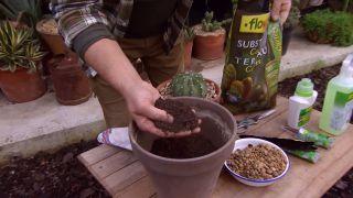 Trasplantar un cactus - Paso 2