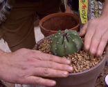 Variedades de cactus y su mantenimiento - Paso 4