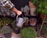 Variedades de cactus y su mantenimiento - Paso 5