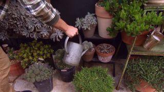 Trasplantar un cactus - Paso 5