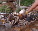 Variedades de cactus y su mantenimiento - Piedras del desierto