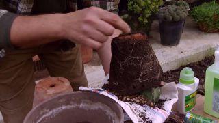 Mantenimiento de los cactus