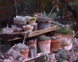 Variedades de cactus y su mantenimiento - Características del cactus