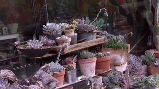 Variedades de cactus y su mantenimiento