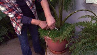 Cómo cuidar plantas de interior en invierno