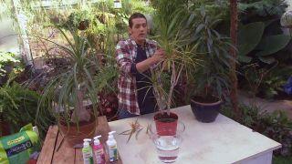 deco-0640-jardineria-cuidados-plantas-interior-invierno-dracena-hojas