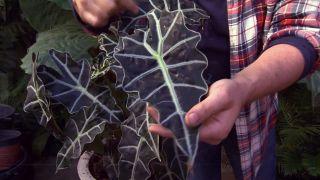 Cómo cuidar las plantas de interior en nvierno