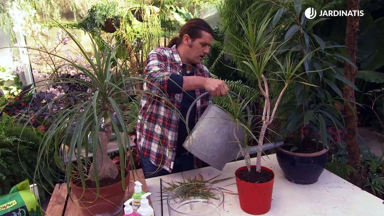 Cuidados de las plantas de interior en invierno