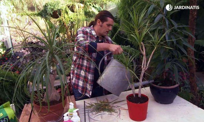 C mo cuidar las plantas de interior en invierno hogarmania for Como cuidar las plantas